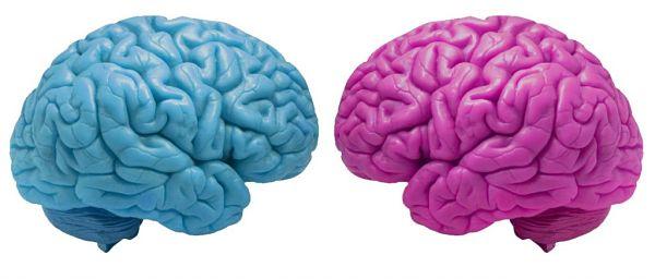 El-cerebro-masculino-envejece-más-rápido-que-el-cerebro-femenino-diferencias
