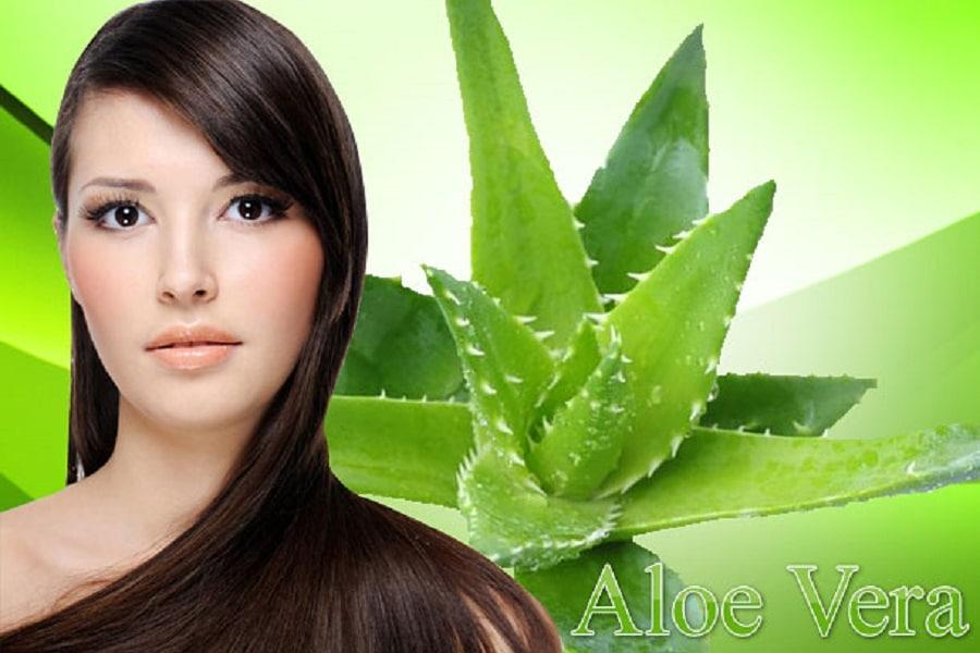 beneficios de la sábila para el cabello