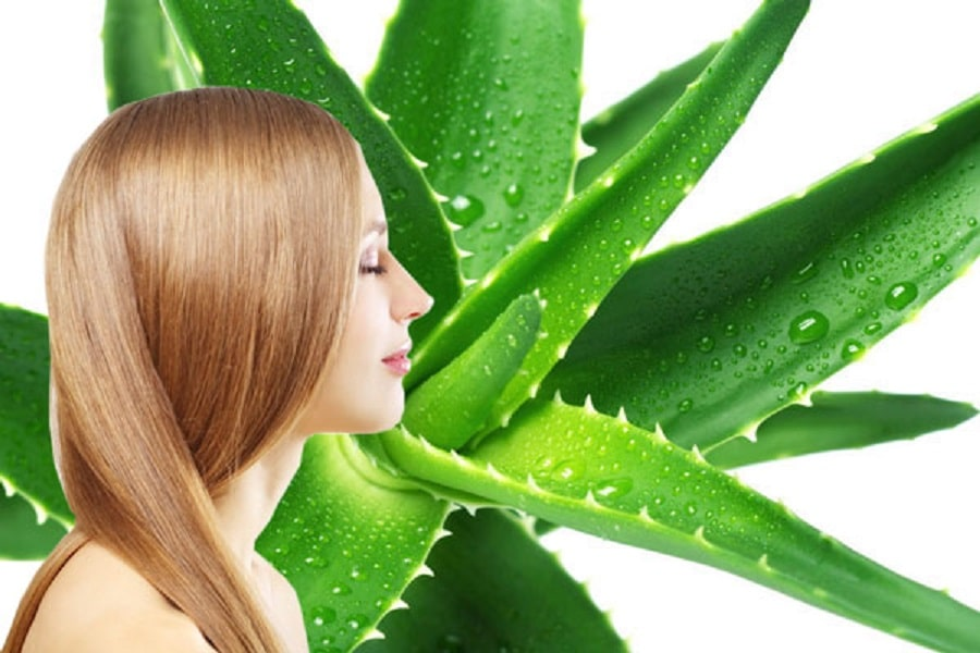 los beneficios de la sábila para el cabello