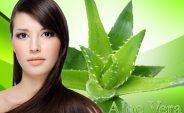 5 Beneficios de la sábila para el cabello ¡Conócelos!