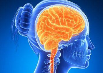 ¿Sabes que son los nervios craneales? Conócelos con sus funciones