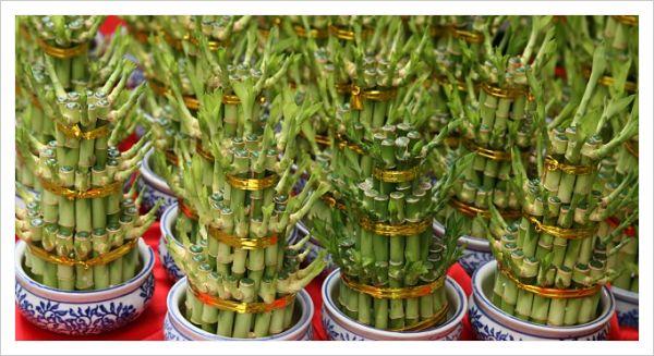8 imperdibles t cnicas de feng shui para el dinero for Planta del dinero feng shui