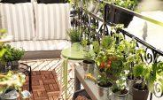 15 Plantas que debes tener en casa ¡Incorpóralas ya!