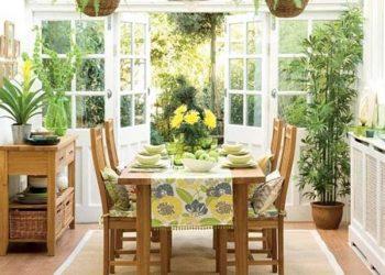 15 Plantas protectoras de malas energías ¿Las tienes en casa?