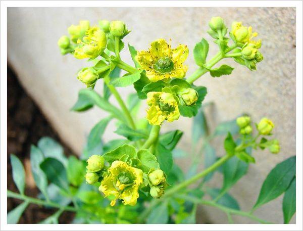 Plantas protectoras de malas energías
