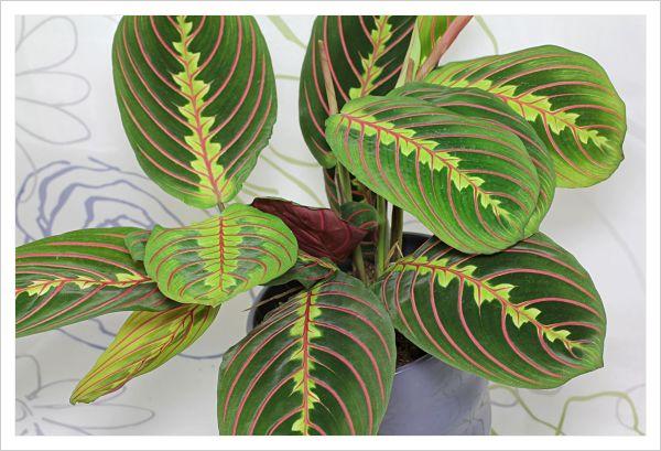 15 plantas de interior que necesitan poca luz elige la for Plantas de interior con poca luz