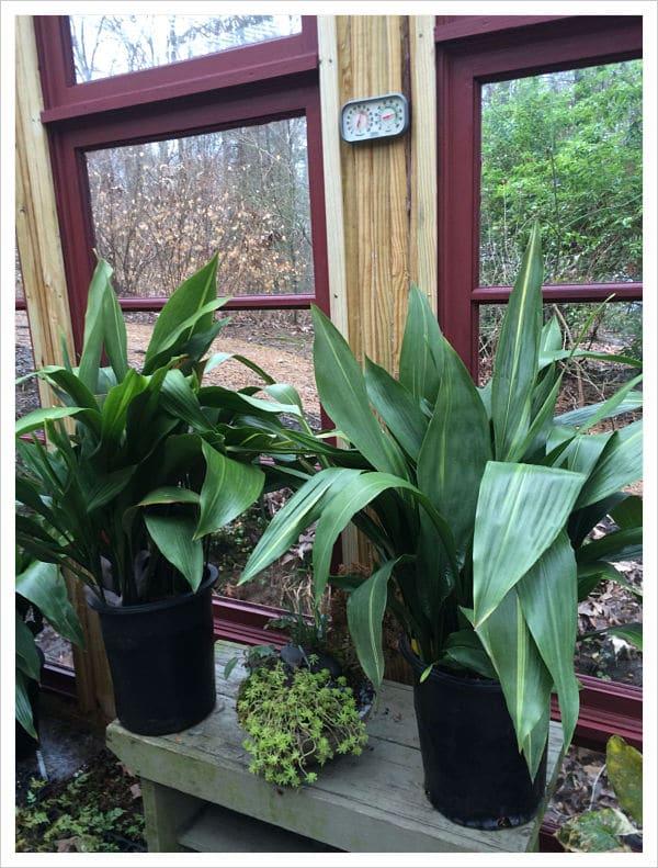 15 plantas de interior que necesitan poca luz elige la mejor para ti - Plantas de interior que no necesitan luz ...