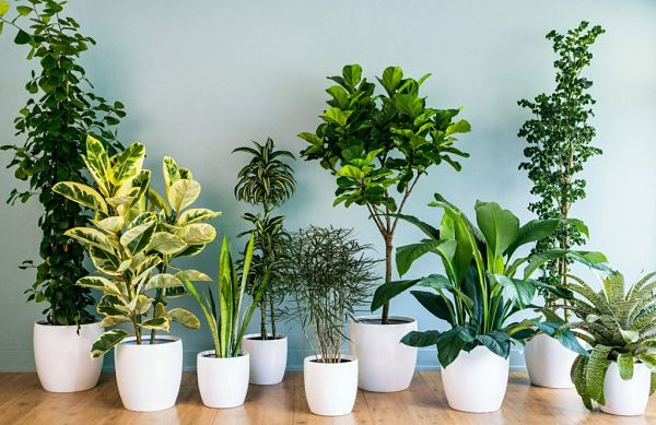 15 Plantas de interior que necesitan poca luz ¡Elige la mejor para ti!