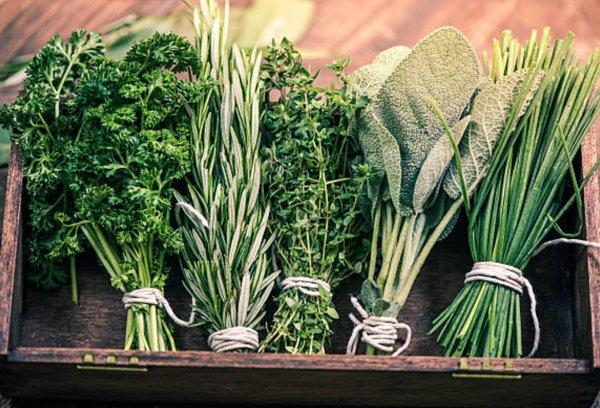 13 hierbas que te servirán para bajar de peso